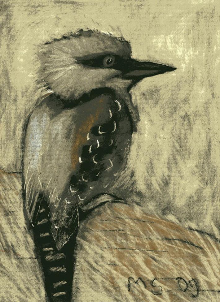 Kookaburra - chalk pastel