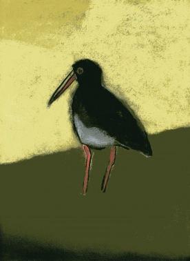 Oystercatcher - chalk pastel