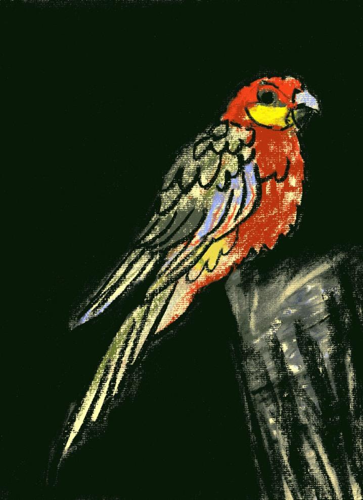 Parrot - chalk pastel