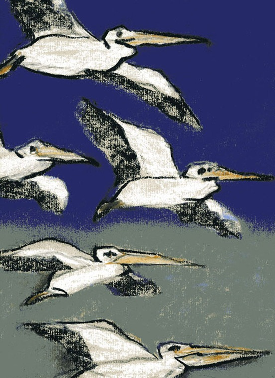 Pelicans - chalk pastel