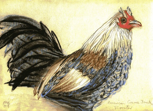 Rooster - chalk pastel