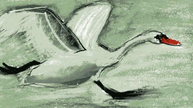 Swan - chalk pastel